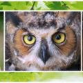 apron owls cotton на АлиЭкспресс — купить онлайн по выгодной цене